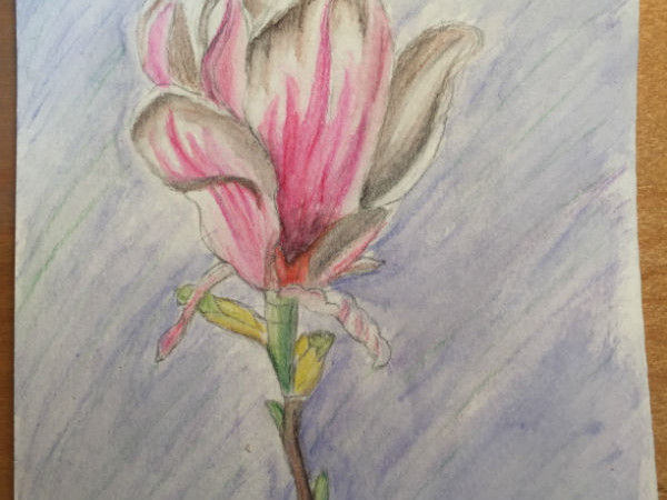 Flower-Drawing